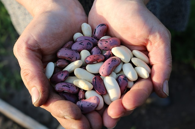 fazole v dlaních