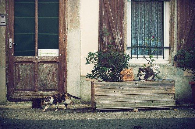 kočky před domem