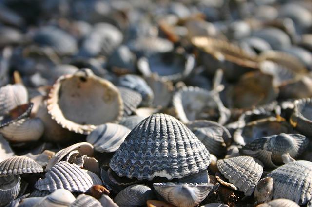 škeble na pláži