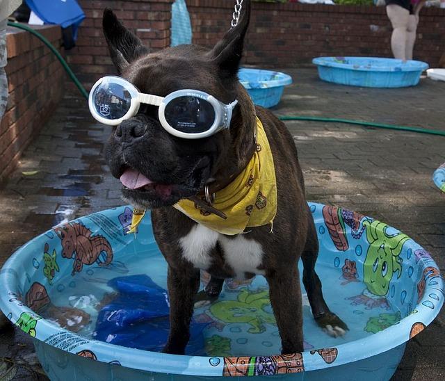 pes v bazénku
