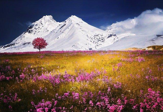 louka u Alp